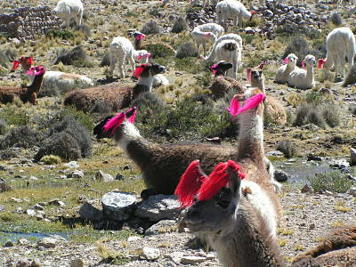 Camino Inca Low Cost