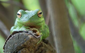Amazonas Selva y Encanto